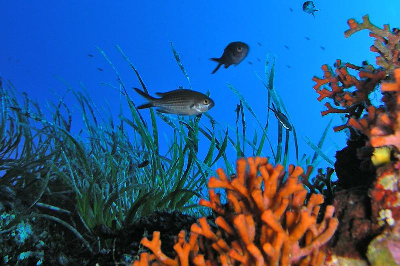 Immersioni in Sardegna
