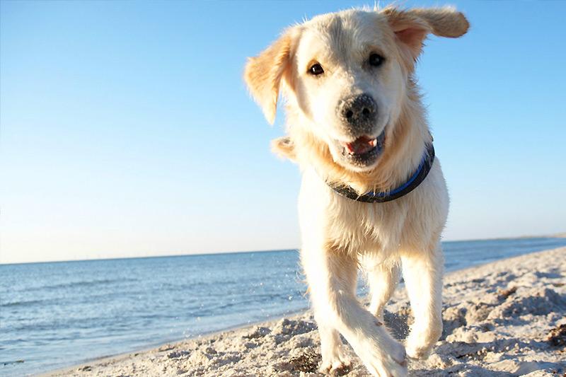 Spiaggia per cani in Sardegna